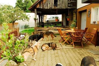 Hunde lernen sich durch den Zaun kennen